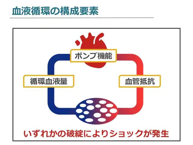 血液循環の構成要素